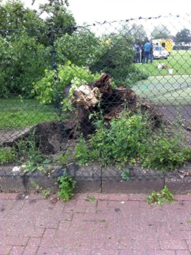 The tree fell at 3.45pm at Spencer Cricket Club in Earlsfield