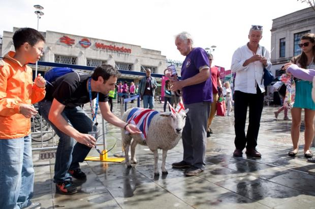 Charity fund-raising sheep brings 'rural sunshine to Wimbledon