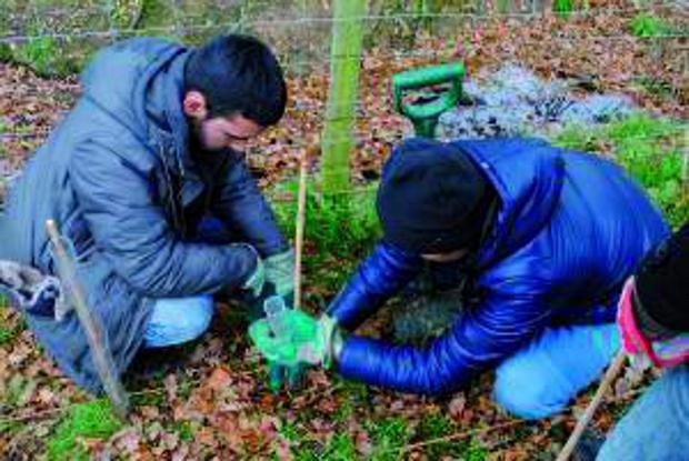 Young Muslims planting trees last year