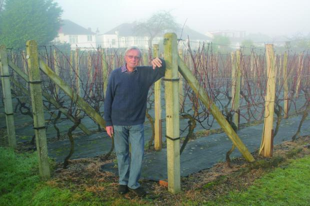 Brain Cooper is waiting for the spring when his vineyard will again flourish