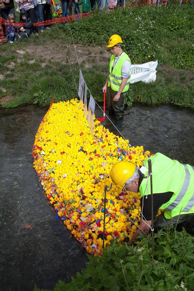 Wimbledon Guardian: The Ewell Court Duck Race 2014 attracted 1,500 visitors