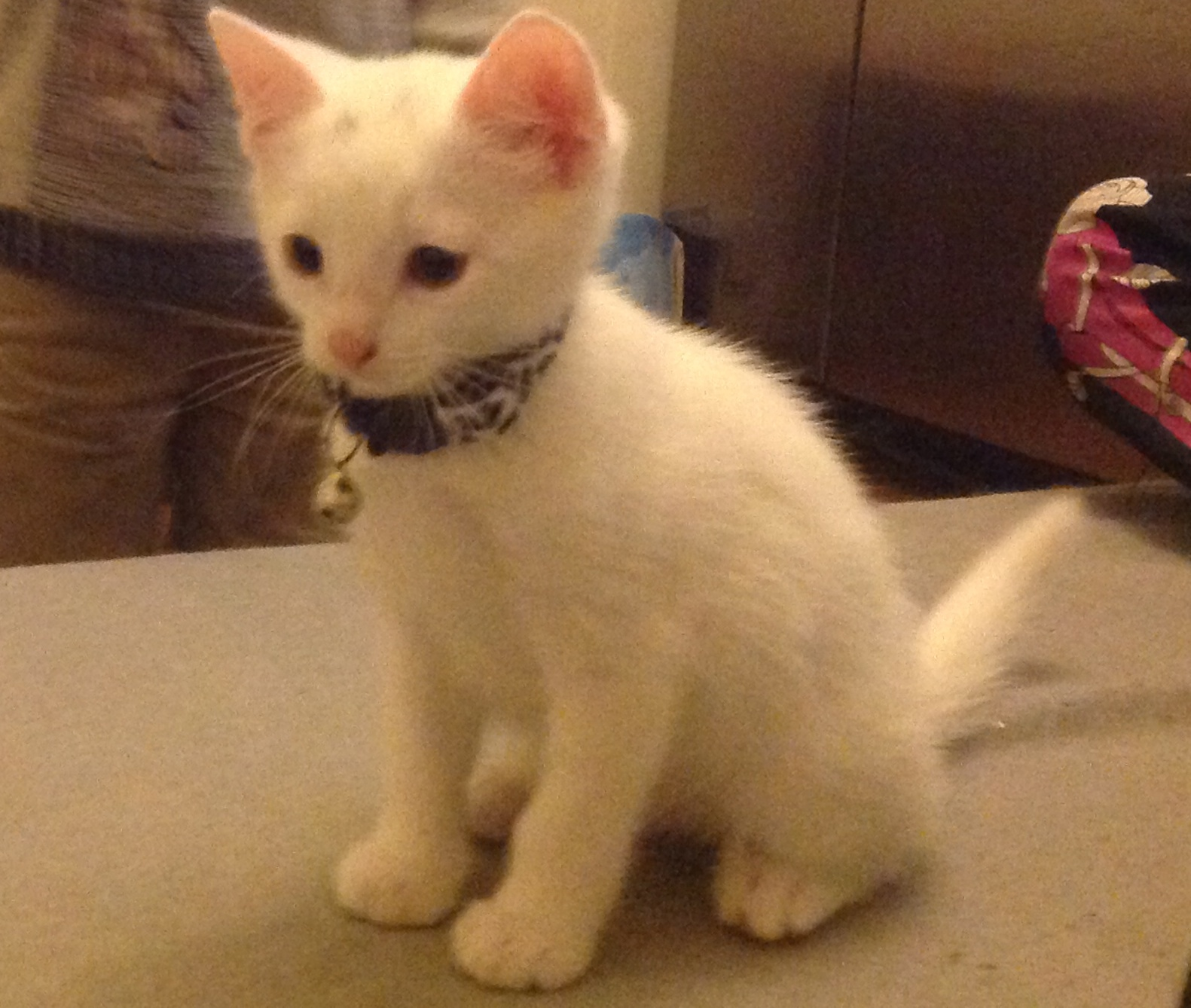Sono, the family kitten found hanged in Christchurch Close, Colliers Wood