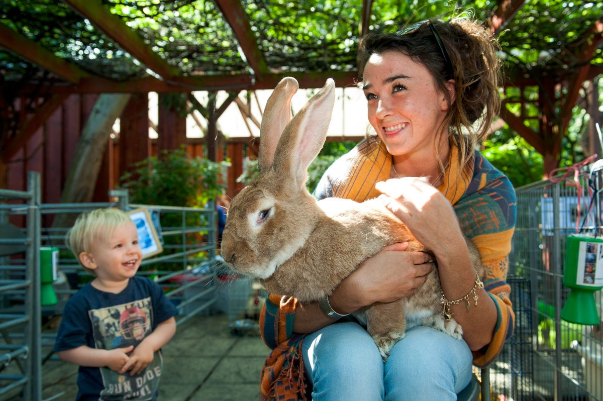 Deen City Farm animals delight children at pop-up petting zoo