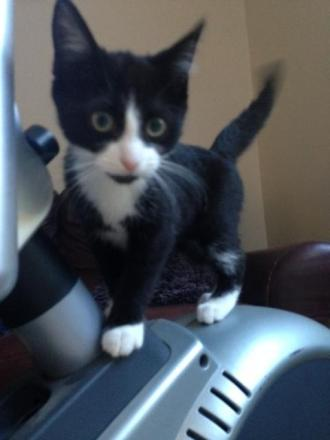 Do you recognise this kitten?