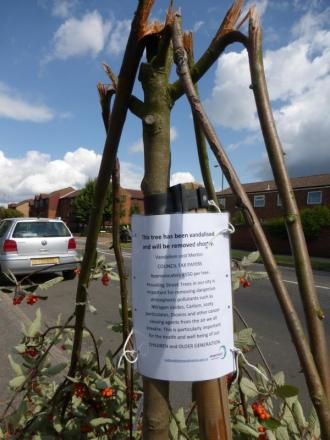 Damaged: One of the trees in Mitcham