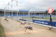 Greyhounds running at the stadium in Plough Lane