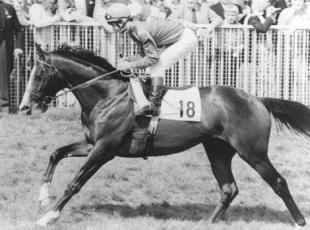 Wimbledon Guardian: MISSING: Shergar was kidnapped in 1983