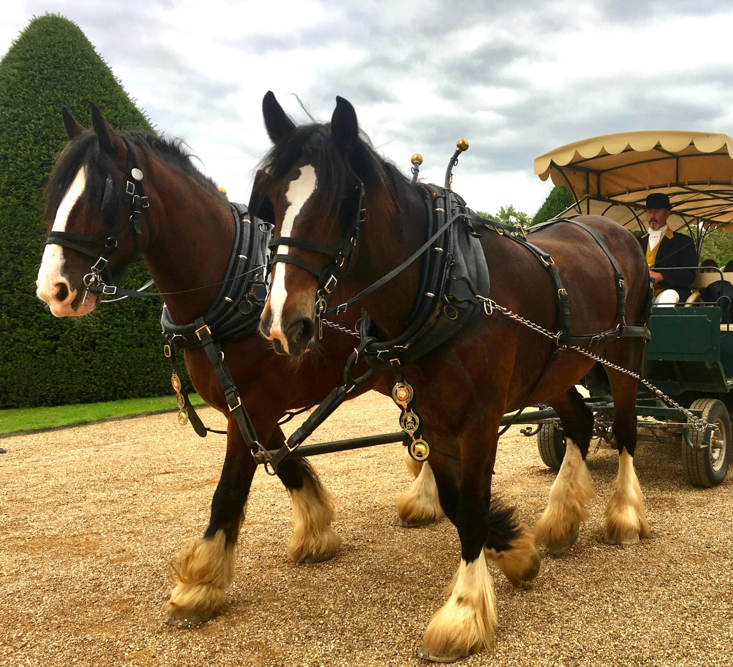 Festive carriage rides, Sat & Sun 7-8, 14-15, 21-22 Dec, 10am-4pm