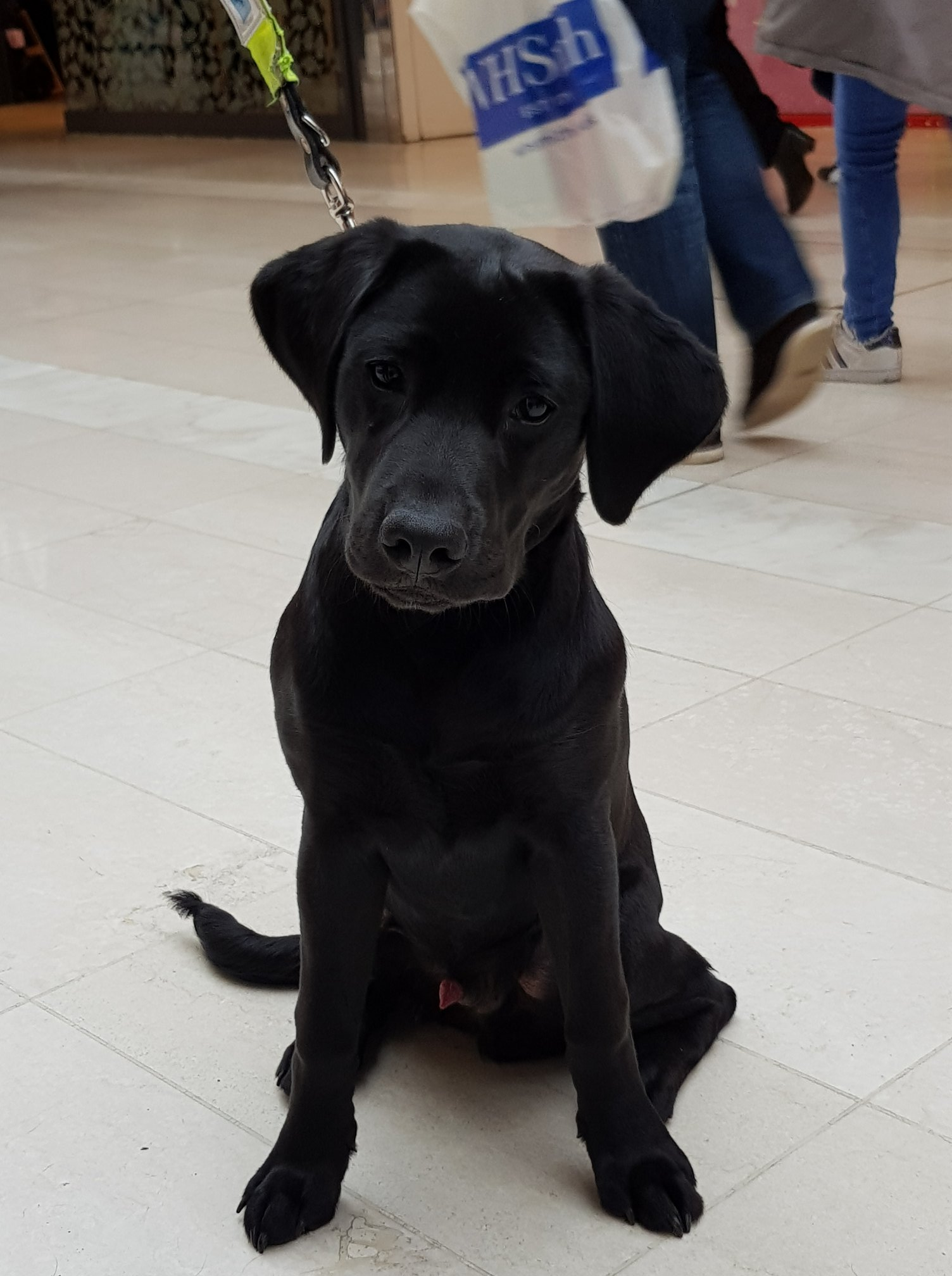 Guide Dogs Event in  The Ashley Centre